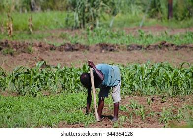 African Farmer - Malawi