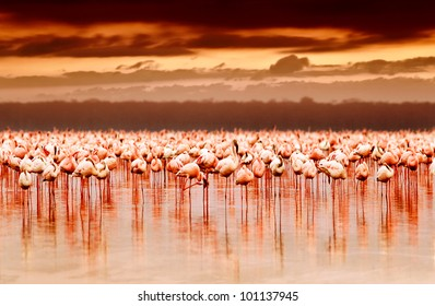 African flamingos in the lake over beautiful sunset, flock of exotic birds at natural habitat, Africa landscape, Kenya nature, Lake Nakuru national park reserve