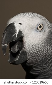 african gray parrot speaking