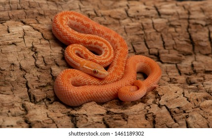 Baby Snakes Images, Stock Photos & Vectors | Shutterstock