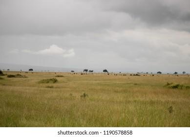an african landscape