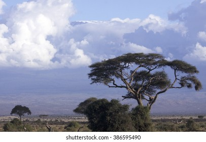 African landscape with acacias.