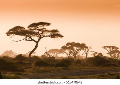 African landscape in Amboseli national Park Kenya