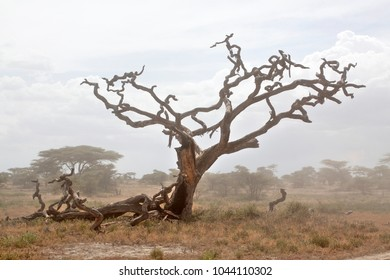 African landscape with dead tree