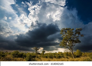 African landscape with dramatic clouds in Kruger National Park, South Africa