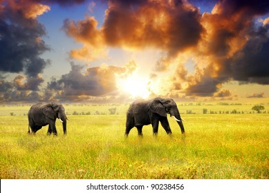 African landscape. African elephants at sunset in the savannah, Serengeti, Tanzania