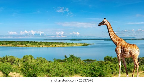 African landscape with Nile River and giraffe