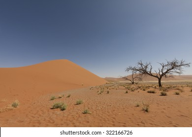 african landscape with red sand dune and dead tree in Namib desert, Naukluft Park, Namibia, Africa