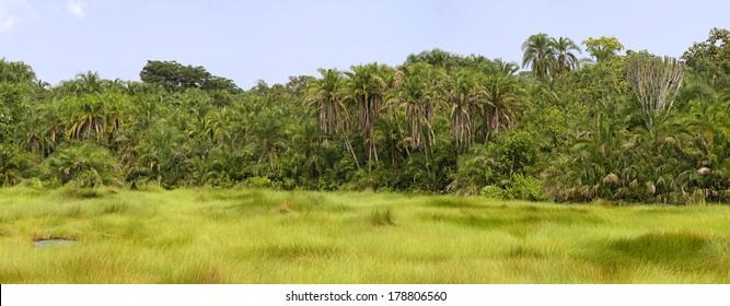 African landscape in Semuliki National Park, Uganda