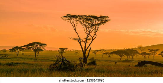 African landscape, the Serengeti National Park in Tanzania