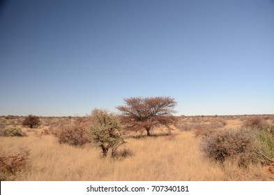 The African landscape. South Africa