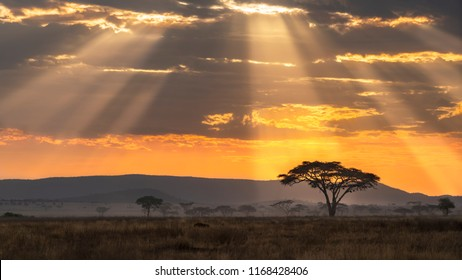 African landscape at sunset