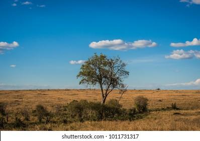 African landscape with a tree  Kenya in Masai Mara