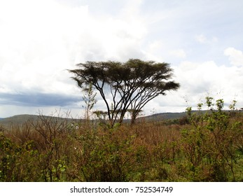 African landscape with trees and mountains and a beautiful sky in Tanzania in the Serengeti National Park on a Safari