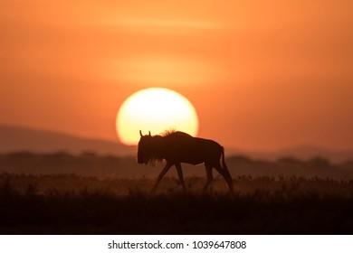 African landscape while in safari