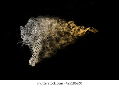 The african leopard is one of the big five animals you must see in africa, animal kingdom collection, African wildlife