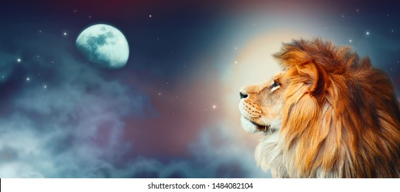 African lion and moon night in Africa. African savannah moonlight landscape, king of animals. Proud dreaming fantasy lion in savanna looking forward on stars. Majestic dramatic starry sky wide banner.