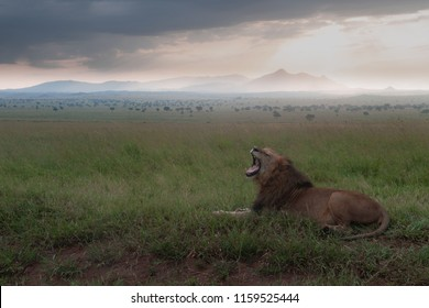 African Lion reveals the savannah of  Kidepo National Park in northern Uganda.  The scene is moody with mystery, a picture of lion in full possession of his whole environment.