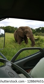 African male Elphant seen from vehicle, Hluhluwe NP