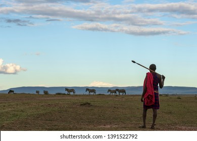 African Masai Tribe in Local traditional dress in open landscape of Masai Mara wildlife Savannah in Kenya