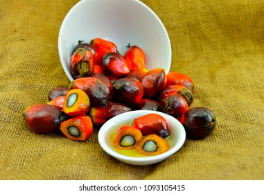 African Oil Palm (Elaeis guineensis). Oil palm originates from west africa but its cultivated in many tropical regions of the world. Indonesia & Malaysia produce about 85% of the palm oil in the world