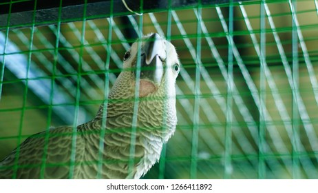 African parrots in the cage