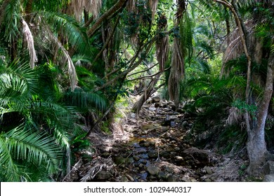 African Rainforest with Palm Leaves and a Small Stream