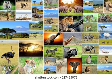 African safari collages. Many animals