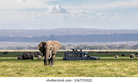 African safari scene with large elephant and unidentifiable tourists in safari vehicle