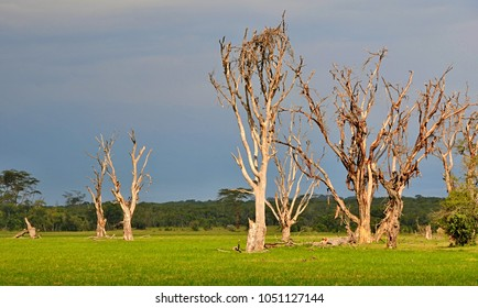 African savanna with dead trees
