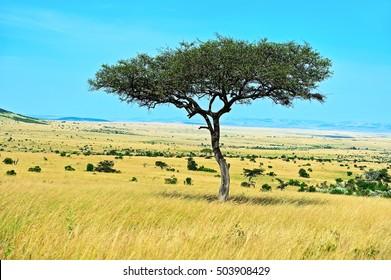 African savanna landscape of the National Park Masai Mara