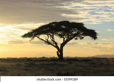 African savanna landscape at sunset
