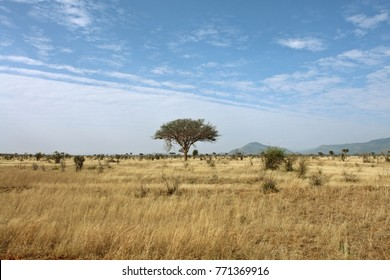African savanna landscape in Tsavo East National Park, Kenya
