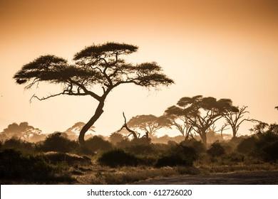 African savannah in the dusty misty sunset gold light