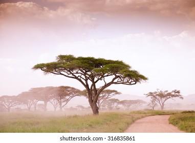 African savannah in the fog and misty light