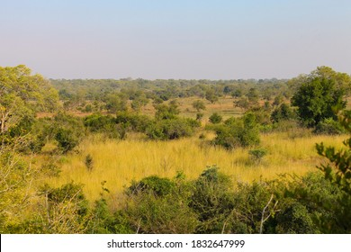 African Savannah grassland and bush in South African Game reserve