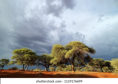 African savannah landscape against a dark sky of an approaching storm, South Africa
