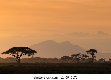 African savannah in the misty foggy sunset light