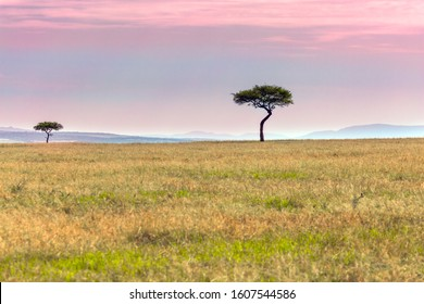 African savannah in the spring. African Acacia is evergreen on the horizon. Ecological, exotic and photo tourism concept