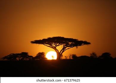 African savannah summer pictrures wild safari Tanzania Rwanda Botswana Kenya