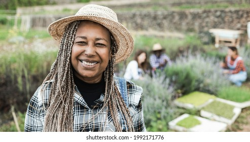 African senior farmer smiling on camera during harvest period - Soft focus on face