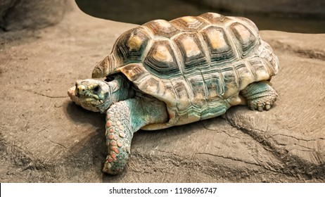 African spurred tortoise, which is one of the largest species of tortoise in the world. North and West African wildlife. Amazing huge turtle. The tortoise is spread from Sahara till Nigeria