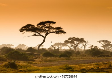 African sunset in Amboseli National Park Kenya