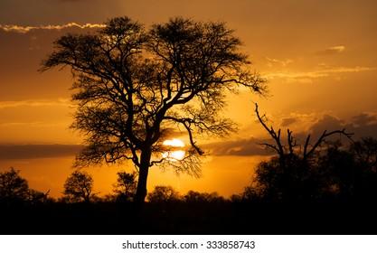 African Sunset bushveld