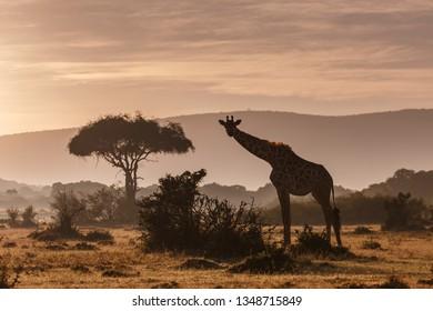 African sunset in Kenya