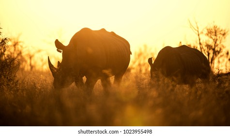 African sunset with rhinoceros