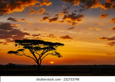 African sunset in the savannah of the Serengeti National Park