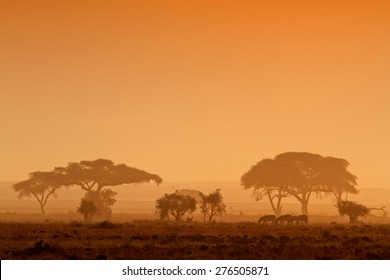 African sunset with silhouetted trees and zebras, Amboseli National Park, Kenya