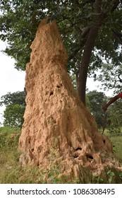 African termite hill mound
