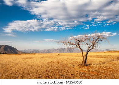 African Tree with blues Sky